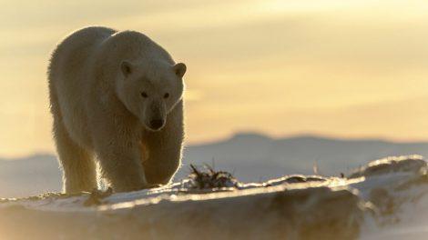 mơ thấy gấu đuổi theo