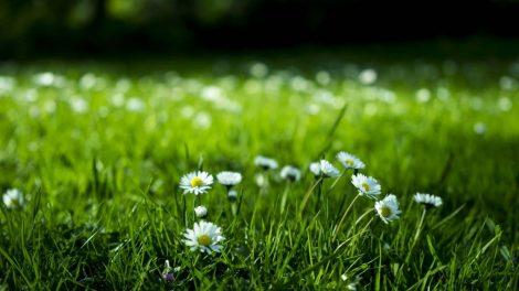 mơ thấy bán cỏ dại